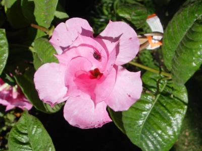 Pink Parfait 2